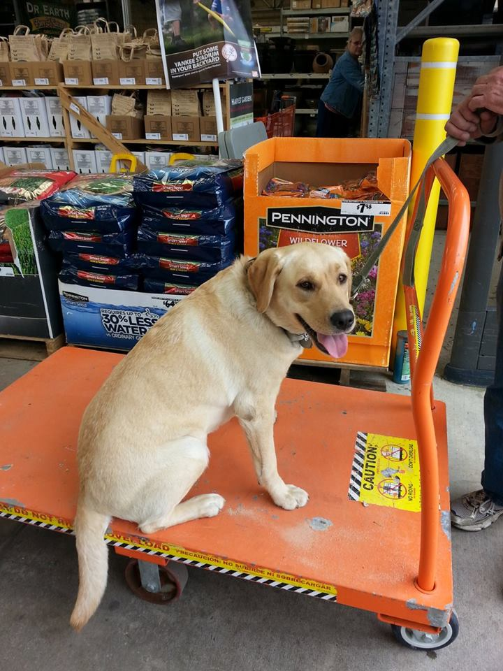 Sally smiling on cart at Home Depot