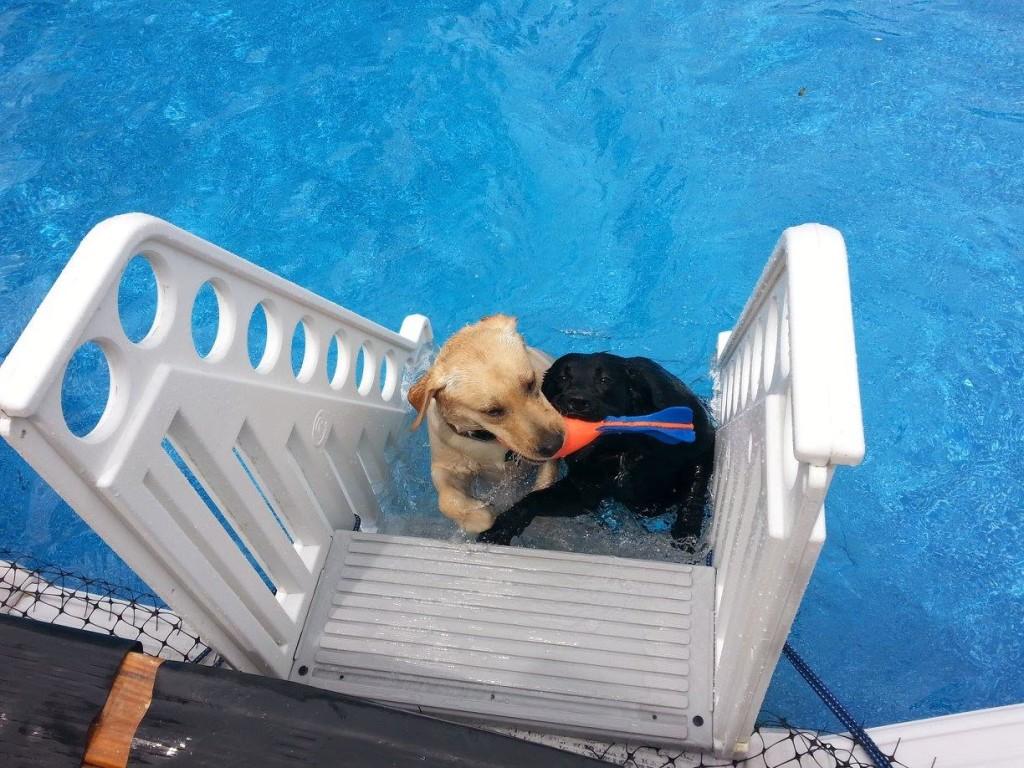girls swimming July bb