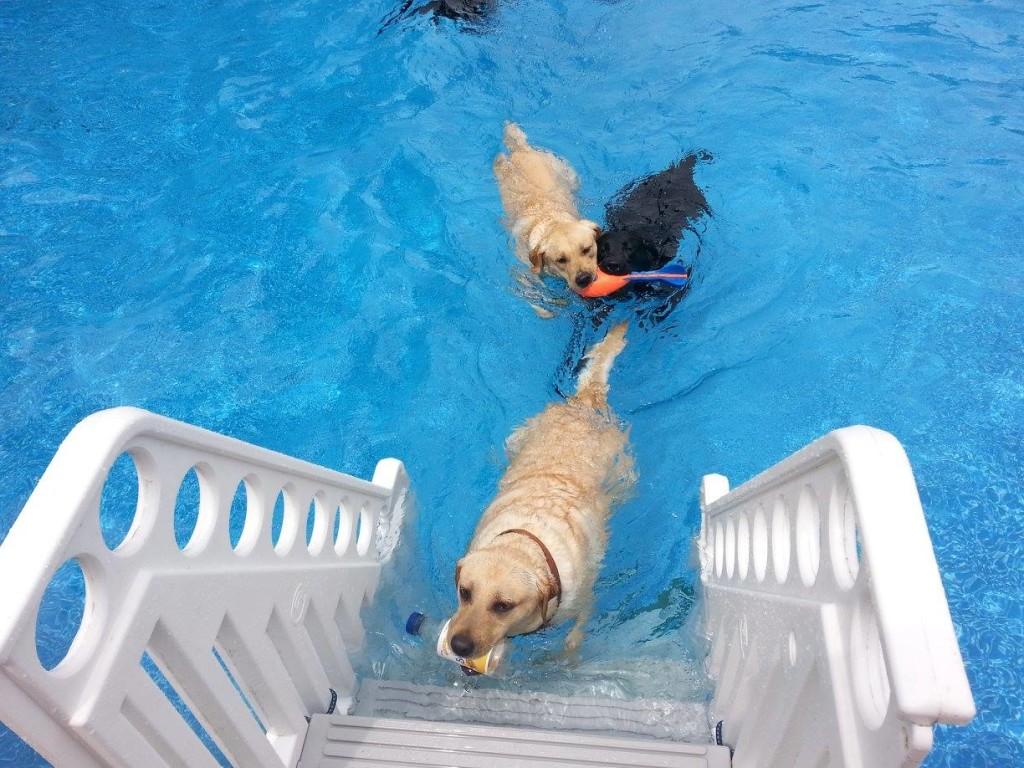 girls swimming July cc