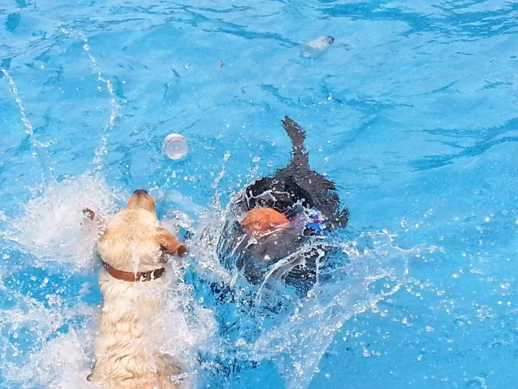 girls swimming July ee