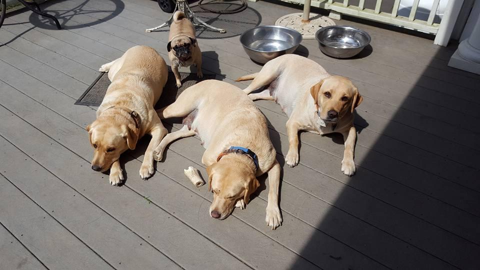 yellow-girls-and-pug-9-22-16