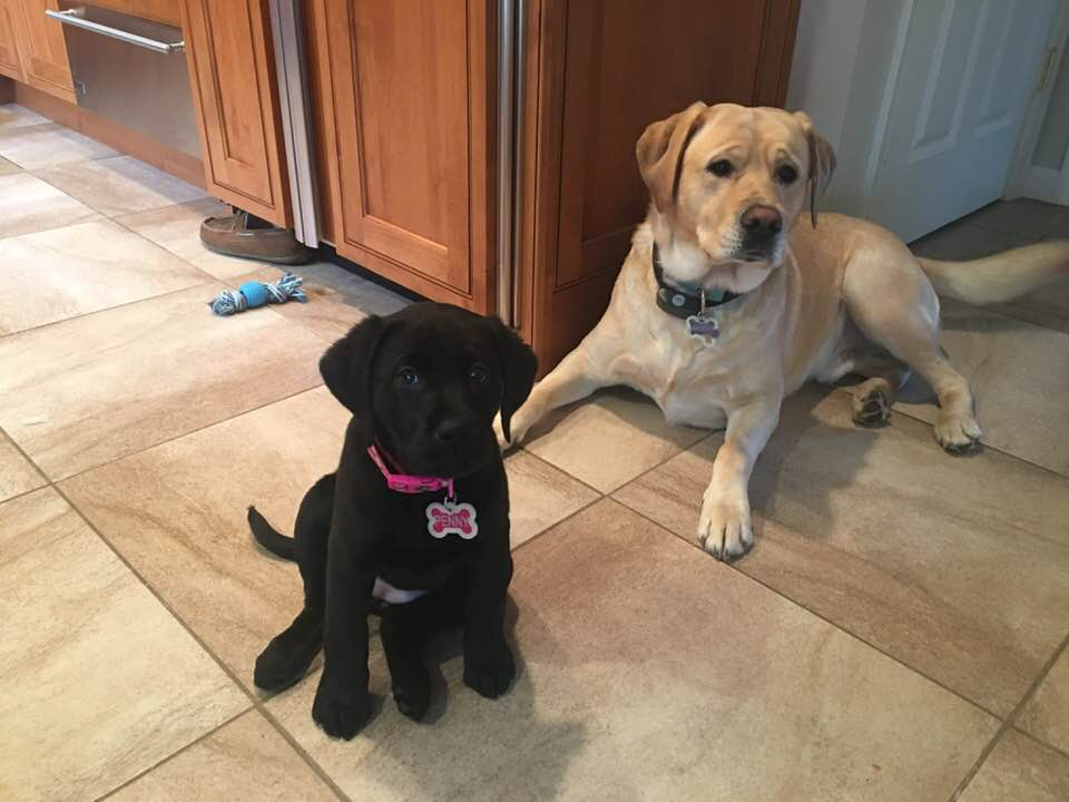 Penny and Murphy Sommer 2018