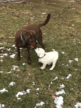 Pierson dogs meet aa